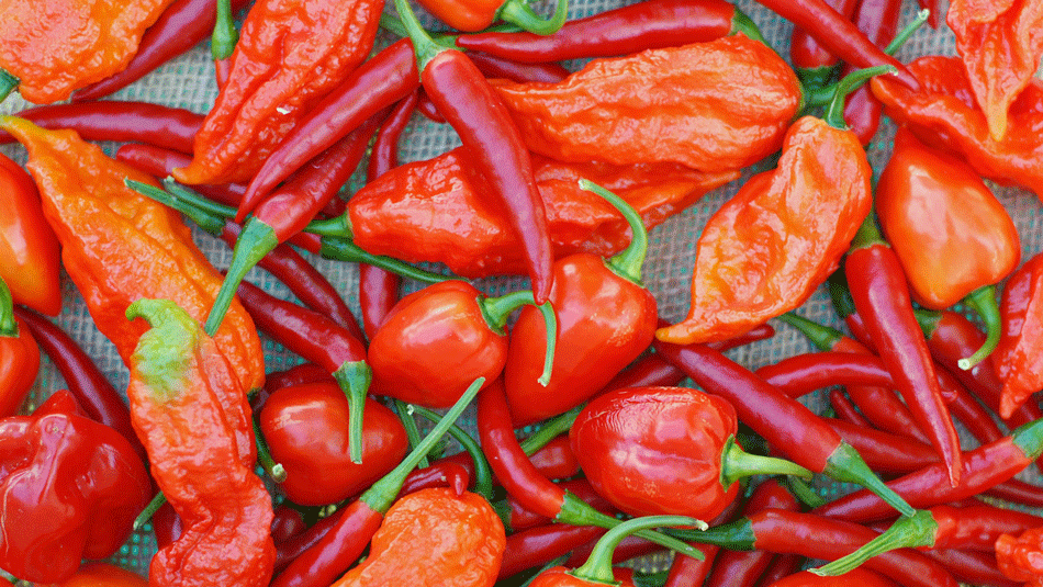 Top 12 Hottest Peppers In The World 2019